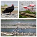 Birds Costa Rica