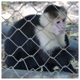 Capuchin Monkey Los Pumas Rescue Centre