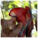 Parrot Los Pumas Rescue Centre