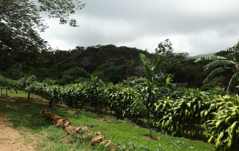 new house for sale or rent in san ramon costa rica