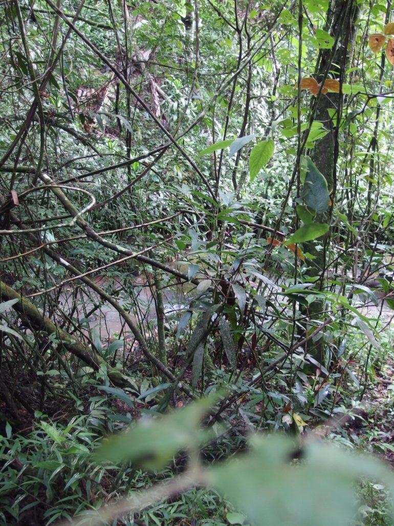small stream in Santiago de San Ramon Costa Rica