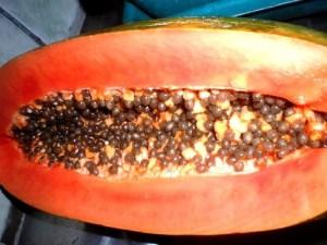 Papaya Fruit - Inside