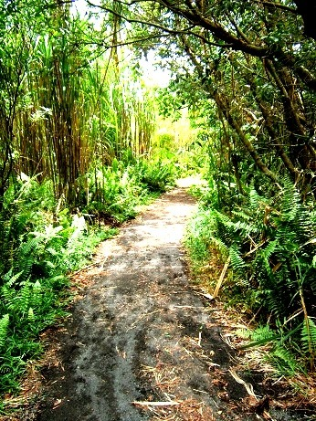 Arenal Volcano National Park - Trail