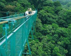 Hanging Bridges - Selvatura