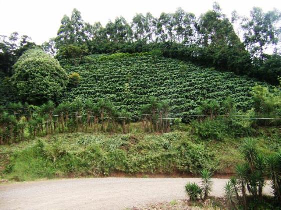 Arenal or Monteverde