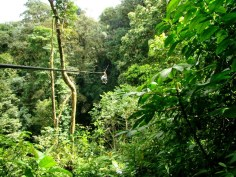 What an adventure! Ricky - ziplining through the rainforest