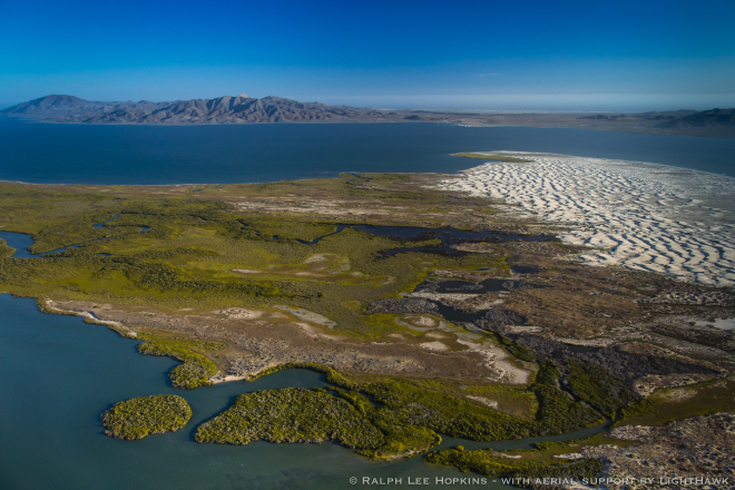 Mangrove Wetlands, Tidal Channels, Bahia Almejas, Magdalena Bay, Baja California, Mexico