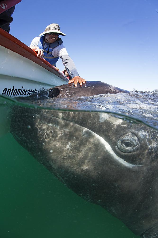 IMG_8863Turista y ballena gris