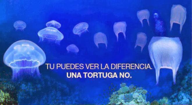 Campaña para promover las consecuencias del uso de bolsas de plástico en la fauna marina. Foto tomada de internet.