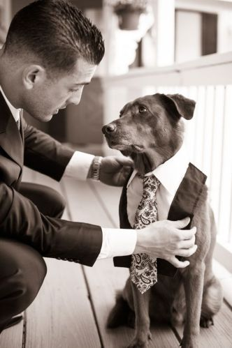 Wedding with your pet