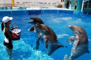 Visita el Acuario de Veracruz y diviértete conociendo las maravillas de la naturaleza marina
