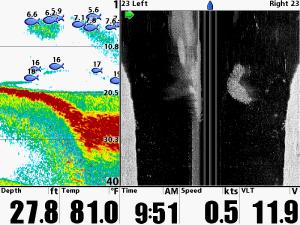 proyección de la ecosonda, donde mediante ondas sonoras se identifica en ultrasonido la imagen del manatí presente.