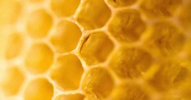 Concurso fotográfico sobre la miel, en Mouans-Sartoux