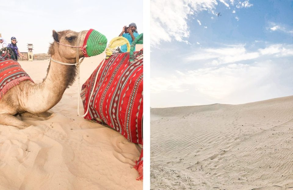 desert excursion in dubai camel rides