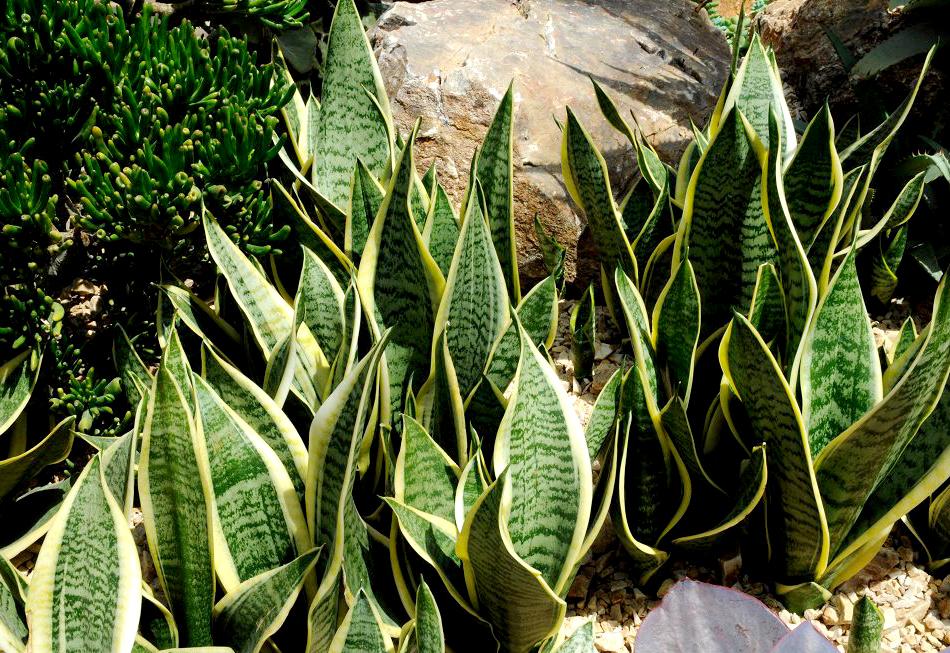medicinal plants costa rica costour