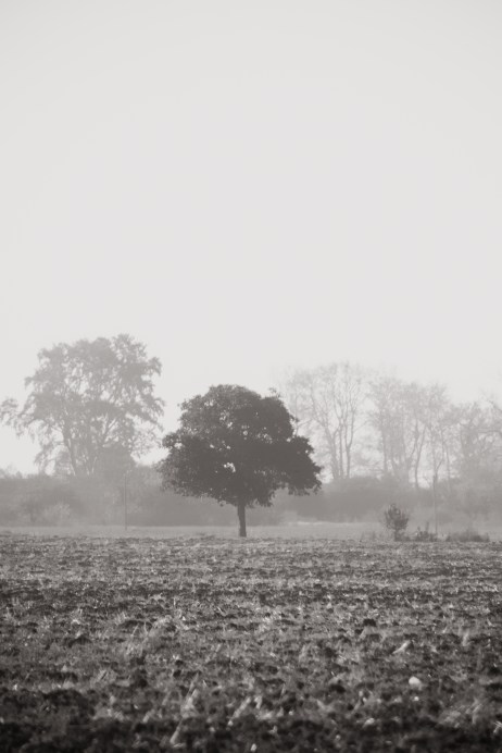 Dimineata de octombrie