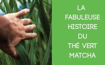 La fabuleuse histoire du thé Matcha