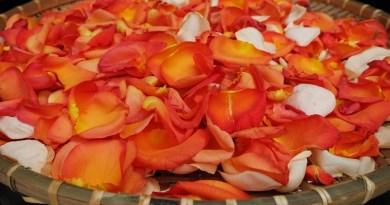 Làm đẹp từ hoa hồng - Spa gội đầu thảo dược, dưỡng tóc thảo dược Cỏ Thơm