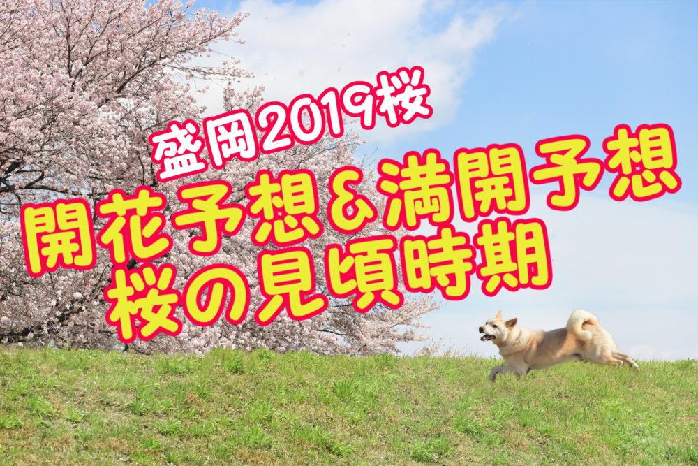 盛岡市2019年桜開花予想満開予想桜の見頃時期