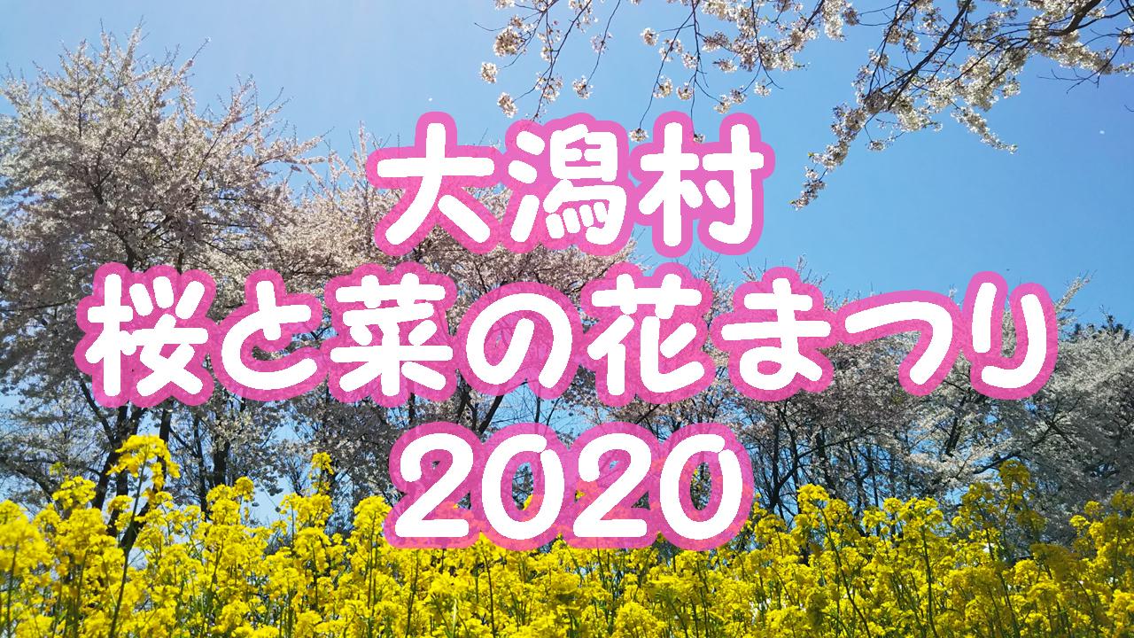 秋田大潟村桜と菜の花まつり