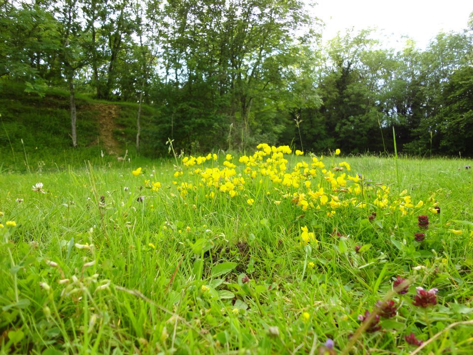 The field at Chedworth Farm 1