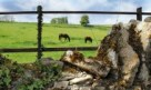 The Swan Swinbook-Cotswold-Countryside-220x130