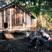 Finial House Broadwell Hens