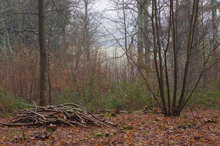 Photo credit: 'Coppiced Woodland and Wood' - Dominic's pics via Foter.com / CC BY Original image URL: https://www.flickr.com/photos/dominicspics/5444670986/