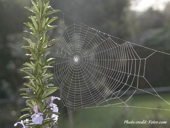 spider 5