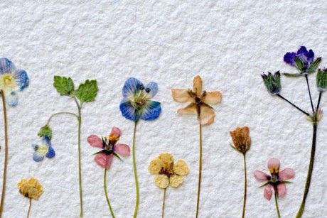 How do I preserve the colour in my pressed flowers    Cottage Life How do I preserve the colour in my pressed flowers