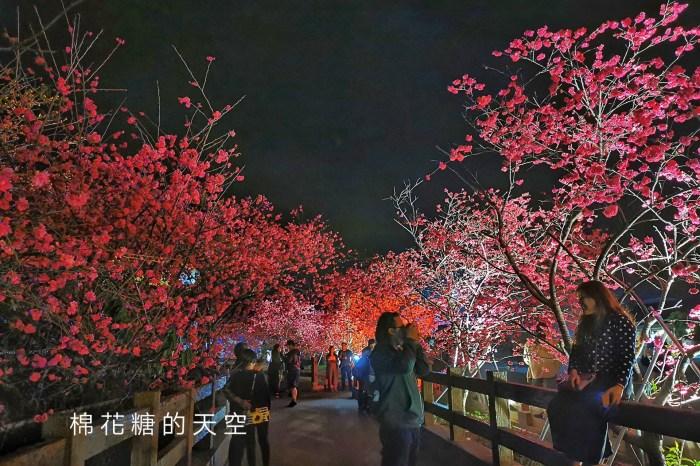 台中櫻花這裡不能錯過!泰安派出所夜櫻更美更浪漫~滿開中
