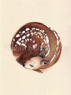 Eilean Shona Arts Roe Deer