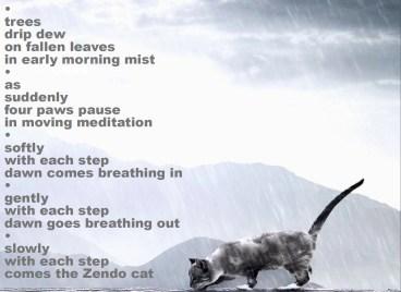 06 zendo cat