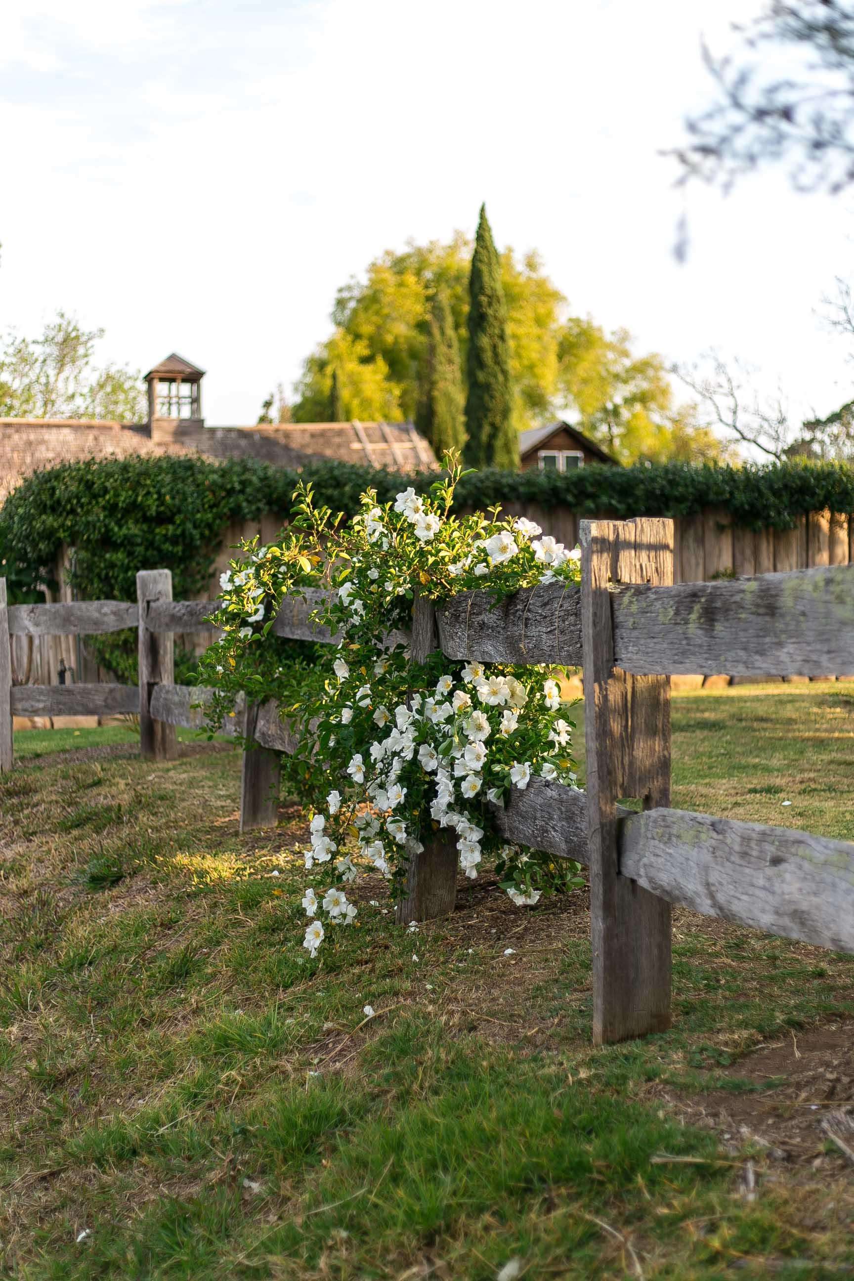 country vine glenmore house camden