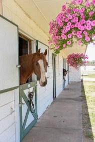 HorseWindow1