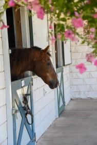 HorseWindow3