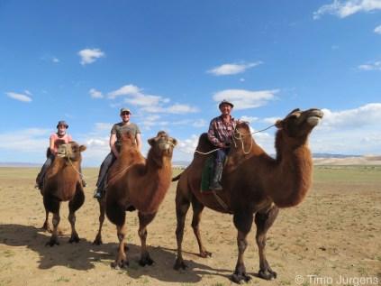 Camel trip Mongolia Gobi desert