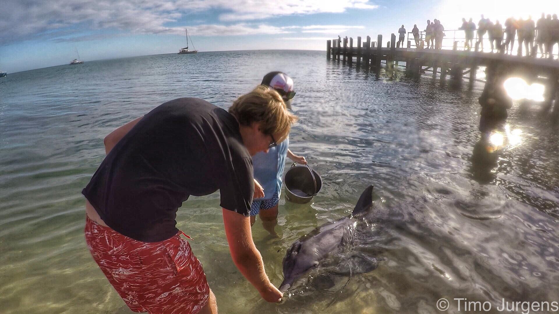 Feeding Dolphin in Monkey Mia