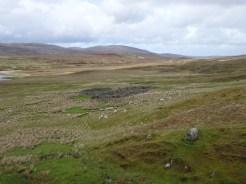 Sheep!!! (and bog)