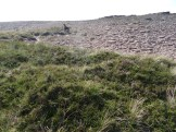 Quite a barren rocky summit to the saddle . . . potentially from overgrazing? Or just the exposed position and poor soil.
