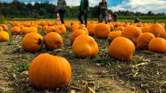 pumpkin autumn activities