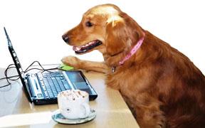 Dog Abby, advice from a Golden