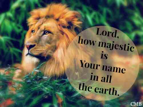 Lion Of Judah Counting My Blessings