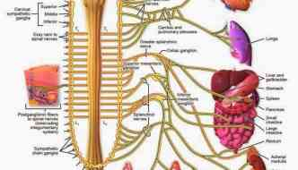 Fibromyalgia Nerve Pain – there might be more to it than you think.