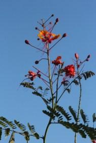 Végétation du désert de Sonora