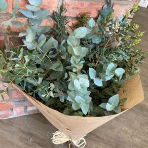 Eucalyptus Mix