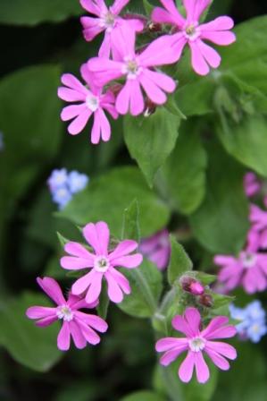 Wildflowers 02