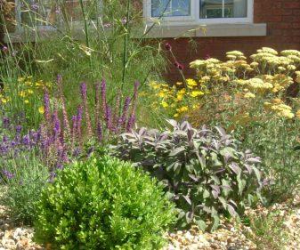 Gravel Garden 06