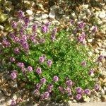Gravel Garden Thumbnail