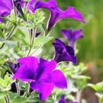 Tender Plants 04
